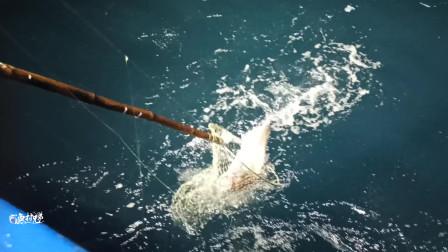 钓友深海钓鱼,遇到南油暗排秘密钓点,好多鱼,太开心了