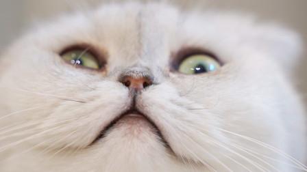 猫咪拆家堪比哈士奇!还想用苦肉计蒙混过关!