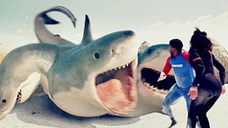 当鲨鱼长了6个头,到底有多无敌!网友:这难道不是海星?