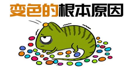 朝变色龙扔一把彩虹糖,它会不停的变色吗?