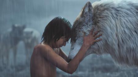 小孩被狼王黑豹养大,7岁徒手打死老虎,终成森林之王!