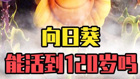 植物大战僵尸:72岁的向日葵为什么被戴夫抛弃?