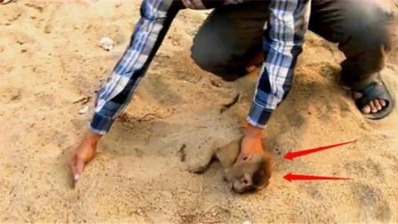 """猴子不慎触电,将其埋进沙子里便能""""复活"""",这有科学依据吗?"""