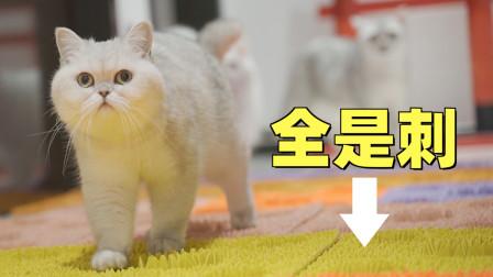 在地上铺满尖刺指压板,小猫咪能顺利通过吗?