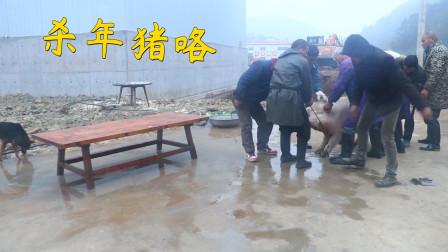 湖南农村杀年猪,300多斤大年猪,动用两个杀猪师傅,太有力道了