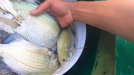 阿明一家顶着大浪出海,没想到遇上海中鱼群,直接爆桶有吃又有卖