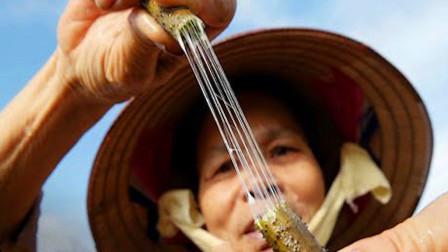 """缅甸用""""藕丝织布"""",花费9200根莲梗织出围巾,一条就要一万块!"""
