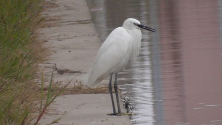 鱼资源差劲,就连白鹭鸟也捉不到鱼吃了,那咱们就钓鱼喂给它吃
