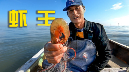 老板出大价钱想吃活虾,馒头不负所托网到极品虾王,收入瞬间翻倍