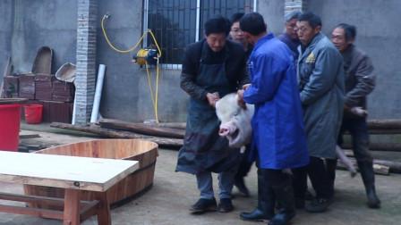 实拍湖南农村杀年猪,300斤的大肥猪,看完就想回家腊肉