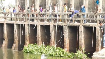 """一排人站在桥上,不断往河里""""扔杆子"""",就能将鱼儿穿肠破肚!"""
