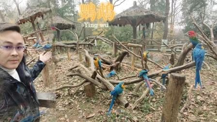 杭州动物园一日游