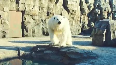 为了不让动物园倒闭,员工假扮动物,没想到,火了!