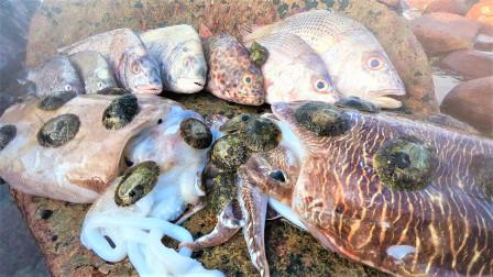 大潮后海边竟发现成片鱼尸,连深海大乌贼都有,这一幕看着都心疼