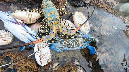 """赶海意外碰上""""蟹潮"""",中华锦绣大龙虾螃蟹全扎堆了,全是值钱货"""