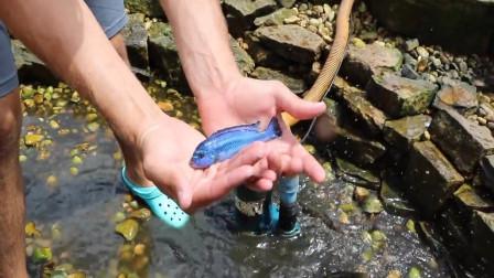 """男子外出野外捕鱼,意外捉到一只""""蓝色鱼"""",这下赚大了!"""