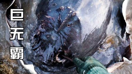 """巨浪卷来浑身漆黑的""""巨无霸"""",身体比两个桶口都宽,太顶级了"""