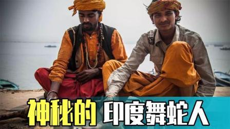 """神秘的印度舞蛇:印度舞蛇人为何能""""与蛇共舞"""",而不被蛇攻击?"""