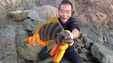 九级狂风巨浪水坑成鱼群避风港,抓1900一斤名贵海鲜全是值钱靓货