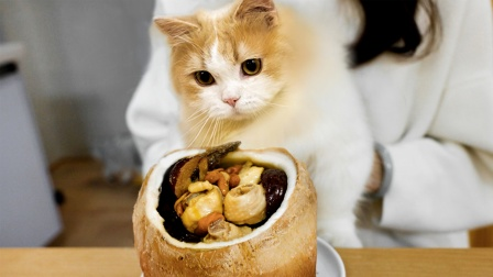 中国最嫩的鸡?3个椰子煮1只,甜嫩无比馋哭小猫咪!