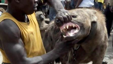 非洲人为啥不怕鬣狗,短短几十秒的视频, 看完满满的心酸!