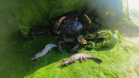 """阿文赶海错过抓虾好时机,结果时来运转抓一堆""""夹人虫"""",太爽了"""