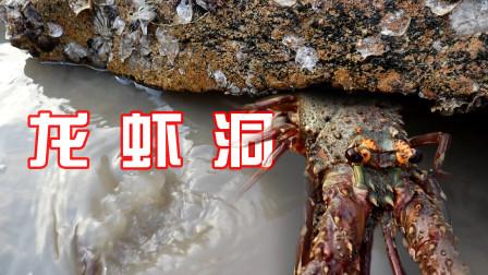 """猪猪赶海发现大种""""龙虾王"""",洞里面还躲着不少猛物,连抓太爽了"""