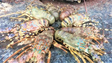 赶海竟发现一大窝罕见龙虾,越摸越多足足有八只,阿明却不会抓走