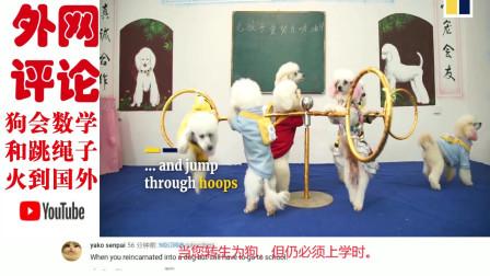 老外看中国:中国一只宠物狗会数学和跳绳火到国外,外国网友:狗子成精了