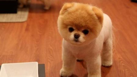 跟着主人一起健身的狗狗,我可真难啊