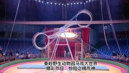 秦岭动物园马戏精彩