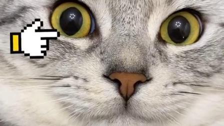怂猫听到老婆来了眼睛就变得好大??@