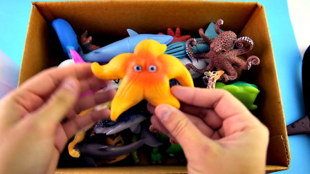 乐享动物乐园带你认识海洋里的海星与章鱼