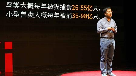 在中国,流浪猫每年捕杀的野生动物是以百亿为单位的