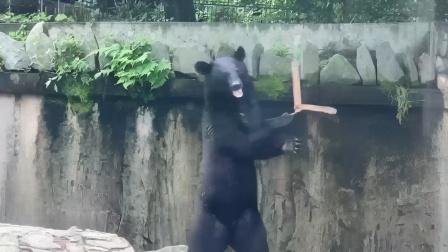 搞笑配音:搞笑狗熊耍双节棍,四川话搞笑