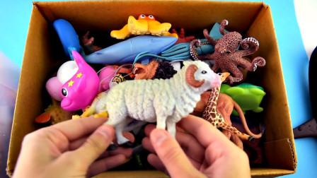 乐享动物乐园带你认识食草山羊与魟鱼