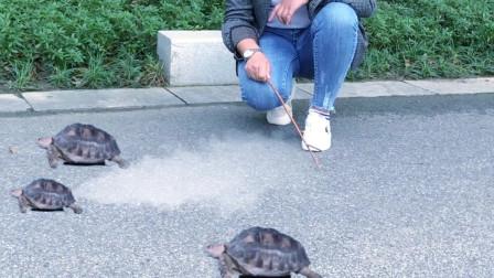 起航哥:我训练出来的神龟,比高铁跑的还快,而且还是喷气式的