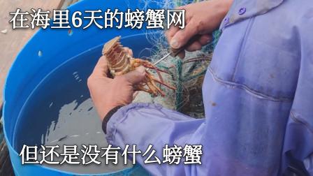 彪哥去拉放在海里面六天的螃蟹网,但是没什么螃蟹,龙虾倒是上了好几只