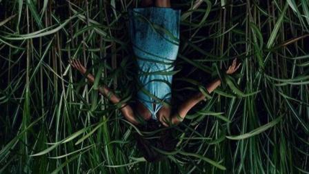 《高草丛中》吸食人类灵魂的高草丛,你敢进吗?