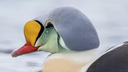 Top5世界上最耐寒的动物!