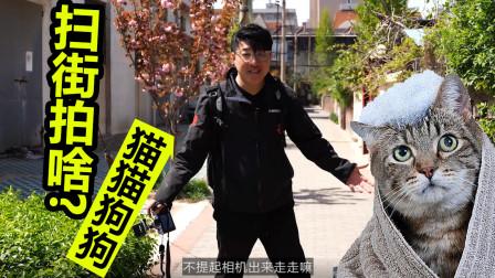 18 扫街拍摄猫狗会增加相片意境
