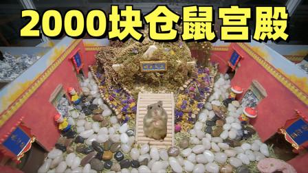 花2000块给土豪仓鼠打造了座地下宫殿,还自带六扇门!