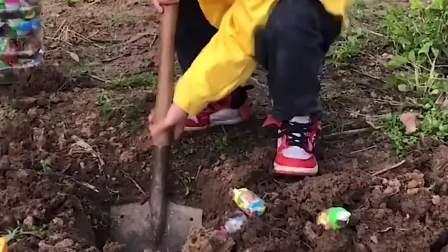 童年的记忆:宝贝种的糖果挖出来好多呀