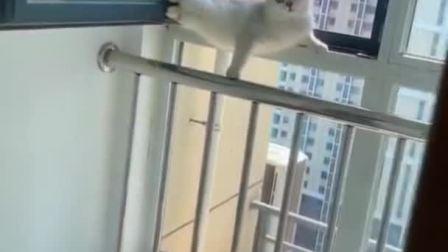 猫:铲屎的别过来呀,不然我就跳楼了!
