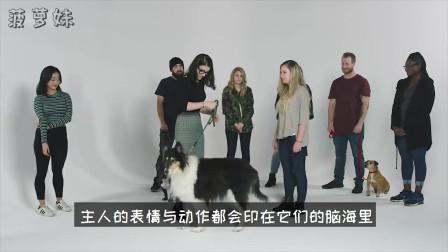 狗狗真的会跟主人越长越像吗?