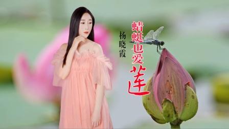 你是蜻蜓我是莲;愿你永远守护在我的身边。聆听杨晓霞带来的《蜻蜓也爱莲》