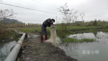 农村小明 :小伙趁着发洪水,往河里撒了一网,收网时真让人兴奋!