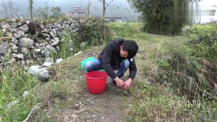 农村小明 :小伙放地笼太奇葩了,用牛血做诱饵,不料收获太棒了!