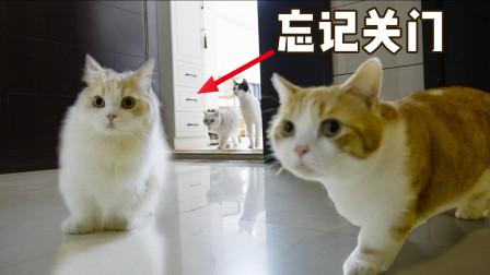主人:我家猫很乖,不关门也不会乱跑~哎?猫呢......