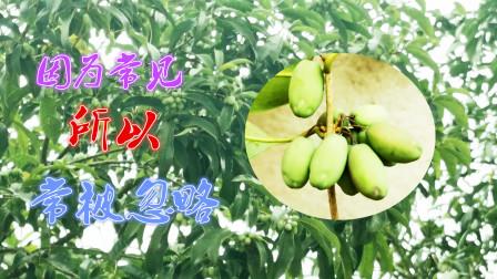 中国十大名花之一的桂花,因为常见,所以这些常用途被人们忽略了